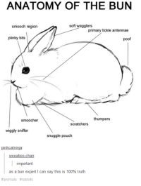 Important: ANATOMY OF THE BUN  soft wagglers  smooch region  primary tickle antennae  plinky bits  poof  thumpers  smoocher  scratchers  wiggly sniffer  snuggle pouch  pinkcatninja  eeaboo-chan  important  as a bun expert l can say this is 100% truth  animals Important