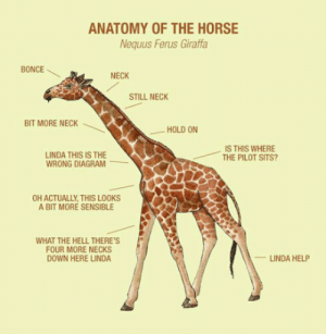 Tumblr, Blog, and Help: ANATOMY OF THE HORSE  Nequus Ferus Giraffa  BONCE  NECK  STILL NECK  BIT MORE NECK  HOLD ON  IS THIS WHERE  THE PILOT SITS?  LINDA THIS IS THE  WRONG DIAGRAM  OH ACTUALLY, THIS LOOKS  A BIT MORE SENSIBLE  WHAT THE HELL THERE'S  FOUR MORE NECKS  DOWN HERE LINDA  LINDA HELP lolzandtrollz:  Anatomy Of The Horse