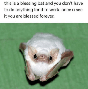 anaxaver: positive-memes: Spreading some love bats are the real blessing : anaxaver: positive-memes: Spreading some love bats are the real blessing
