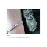 Cats, Time, and Girl Memes: ancrew:  one time i made friendship bracelets for my cat and i sounds like @hoeposts 😂😛