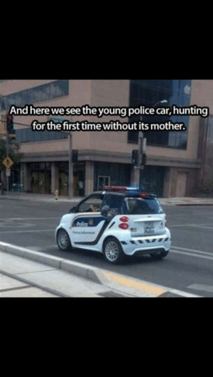 Funny, Police, and Hunting: And here we see the young police car, hunting  for the first time without its mother. So majestic. via /r/funny https://ift.tt/2y2YMee
