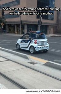 Police, Tumblr, and Hunting: And here we see the young police car,hunting  for the first time without its mother  you should probably go to TheMetaPicture.com srsfunny:  Young Police Car Spotted