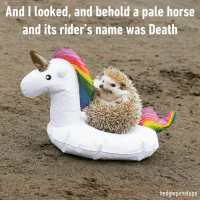 Dank, Death, and Horse: And I looked, and behold a pale horse  and its rider's name was Death  hedgiepenelope Onward my noble steed!