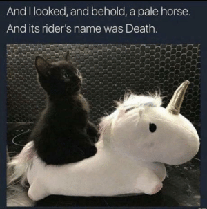 laughoutloud-club:  One of the four horsecats of the apocalypse: And I looked, and behold, a pale horse.  And its rider's name was Death. laughoutloud-club:  One of the four horsecats of the apocalypse