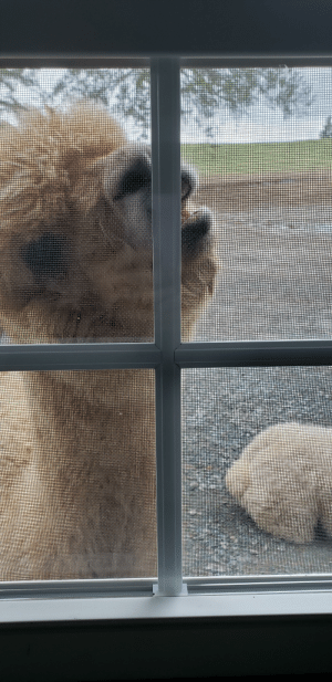 And I thought being a window licker was bad: And I thought being a window licker was bad