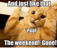Dank, The Weekend, and 🤖: And just like that  Poof  The weekend! Gone! #jussayin