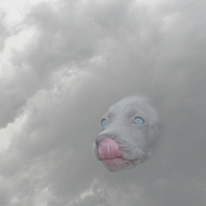 And my new favorite hobby is to photoshop dog faces to clouds: And my new favorite hobby is to photoshop dog faces to clouds