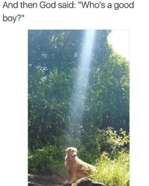 "God, Best, and Good: And then God said: ""Who's a good  boy?"" The best of boys via /r/wholesomememes https://ift.tt/2Mn82m8"