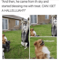 """Hallelujah, Lol, and Memes: """"And then, he came from th sky and  started blessing me with treat. CANIGET  A HALLELUJAH?!""""  @BetaSalmon  Hallelujah!! Lol 😂"""