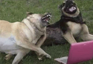 "And then he said: ""Come in, he doesn't bite"". And I bit him !!!: And then he said: ""Come in, he doesn't bite"". And I bit him !!!"