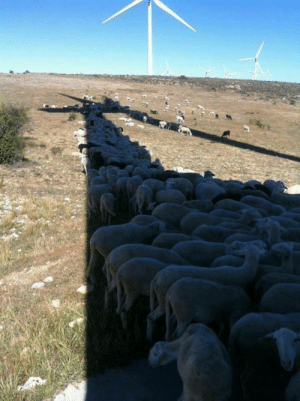 Bad, Local, and Wind: And they say wind turbines are bad for local wildlife