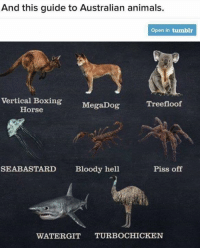 Animals, Boxing, and Memes: And this guide to Australian animals.  Open in tumblr  Vertical Boxing MegaDog  Treefloof  Horse  SEABASTARD  Bloody hell  Piss off  WATERGIT TURBOCHICKEN Learning Aussie Animal Names