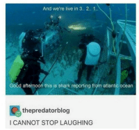 Memes, Shark, and Good: And we're live in 3.. 2. 1.  Good afternoon this is shark reporting from atlantic ocean  thepredatorblog  I CANNOT STOP LAUGHING https://t.co/HidNFkTaEi
