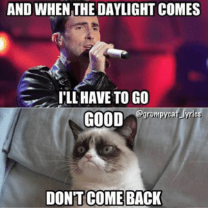 Best comeback Memes: AND WHEN THE DAYLIGHT COMES  I'LL HAVE TO GO  GOOD  grumpycaf lyric  DON'T COME BACK Best comeback Memes
