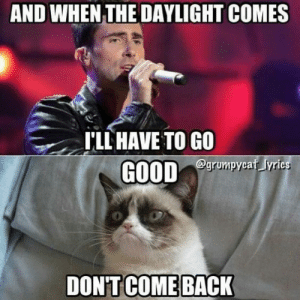 Grumpy Cat Has The Perfect Chorus Ending For Every Song - I Can Has ...: AND WHEN THE DAYLIGHT COMES  T'LL HAVE TO GO  egrumpycaf yrics Grumpy Cat Has The Perfect Chorus Ending For Every Song - I Can Has ...