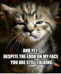 Cats, Love, and Meme: AND YET  DESPITE THE LOOKONMY FACE  YOU ARE STILL TALKING. LOVE!! Via Grumpy Cat Memes