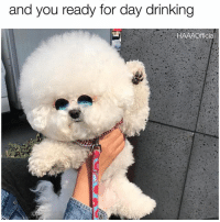 Drinking, Fucking, and Yeah: and you ready for day drinking  1HAAAOfficial Yeah, it's Tuesday. So fucking what. I'm not going to work today. (Pic via @bichon_tori)