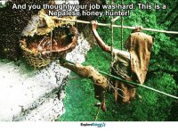 1 word: RESPECT!!: And you thought your job was hard. This is a  Nepalese honey hunter!  Talent  Explore 1 word: RESPECT!!