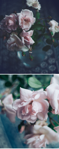 Instagram, Tumblr, and Blog: andantegrazioso:Dreaming of petals |  katy_noelle