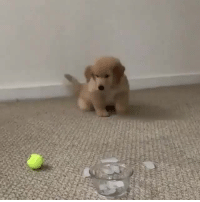 "andiamburdenedwithgloriousfeels:  doggosource: pupper meets ice This has the same energy of that video of Chris Hemsworth taking sips of soup and between sips going, ""It's hot"", ""It's still hot"" : andiamburdenedwithgloriousfeels:  doggosource: pupper meets ice This has the same energy of that video of Chris Hemsworth taking sips of soup and between sips going, ""It's hot"", ""It's still hot"""