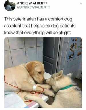 mAh heart: ANDREW ALBERTT  @ANDREW1ALBERTT  This veterinarian has a comfort dog  assistant that helps sick dog patients  know that everything will be alright mAh heart