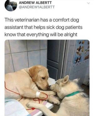 Good, Veterinarian, and Sick: ANDREW ALBERTT  @ANDREW1ALBERTT  This veterinarian has a comfort dog  assistant that helps sick dog patients  know that everything will be alright This is good