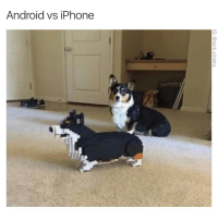 Android vs iPhone If you have an android this might not be funny because both dogs are going to look pixelated