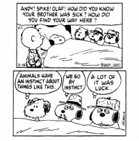 Animals, Memes, and Animal: ANDY SPIKE! OLAF! How DID YOU KNOW  YOUR BROTHER WAS SICK How DID  YOU FIND YOUR WAY HERE  SNOOPY COMICS  2 IS  ANIMALS HAVE  WE 60  A LOT OF  AN INSTINCT ABOUT  BY  IT WAS  THINGS LIKE THIS  INSTINCT  LUCK The siblings snoopycomics cartoon comics charliebrown snoopy