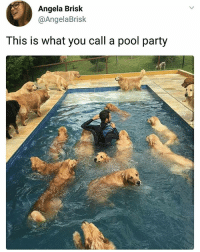 Memes, Party, and Shoes: Angela Brisk  @AngelaBrisk  This is what you call a pool party Hold my shoes   Follow @aranjevi for more!