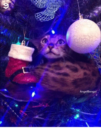 Cute, Dank, and Angel: AngelBengal This ornament surely looks cute  By Angel Bengal