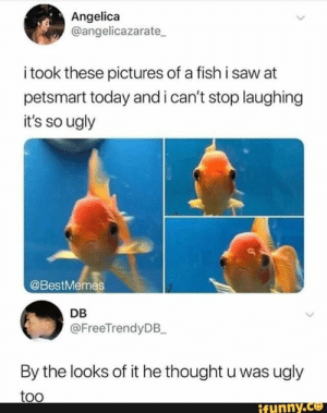 Found on iFunny: Angelica  @angelicazarate  i took these pictures of a fish i saw at  petsmart today and i can't stop laughing  it's so ugly  @BestMemes  DB  @FreeTrendyDB_  By the looks of it he thought u was ugly  too  ifynny.co Found on iFunny