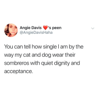Memes, Quiet, and Nice: Angie Davis s peen  @AngieDavisHaha  You can tell how single I am by the  way my cat and dog wear their  sombreros with quiet dignity and  acceptance. nice nice