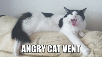 Angry Cat: ANGRY CAT VENT