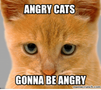 Angry Cat: ANGRY CATS  GONNA BE ANGRY  memecrunch.com