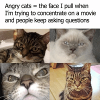 Friend : what's your mood ? Me : angry cat: Angry cats the face I pull when  I'm trying to concentrate on a movie  and people keep asking questions Friend : what's your mood ? Me : angry cat