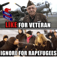 Memes, 🤖, and Murica: ANGRY  EAGLE  LIKE FOR VETERAN  IGNORE FOR RAPEFUGEES Rapefugees suck! Veterans rock! angryeagle americaneagle stupidliberals secondamendment trump donald guns donaldtrump hillno feelthebern Bernie killary hillary hillaryclinton murica merica america military guns patriot politics gop republican democrat nobama obama makeamericagreatagain USA