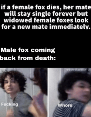 *angry fox noises* by Rakanthecoolguy MORE MEMES: *angry fox noises* by Rakanthecoolguy MORE MEMES