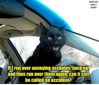 Kitties, Memes, and youtube.com: ANGRY KITTY  NEEDS A  LAUGH!!!  I run over annoying assholes backup  andihenrun over them again can itstiI  be called an accident? https://www.youtube.com/watch?v=uj72jRFfV6w