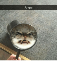 Memes, Grumpy Cat, and Angry: Angry What's wrong with you? Grumpy cat? Follow @9gagcute