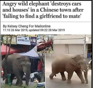 Me_irl: Angry wild elephant 'destroys cars  and houses' in a Chinese town after  'failing to find a girlfriend to mate'  By Kelsey Cheng For Mailonline  11:10 26 Mar 2019, updated 09:22 28 Mar 2019  249 ED Me_irl