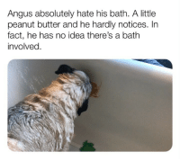 (@doggosdoingthings) posts the best dog meme content! (📹: reddit u-montyleak): Angus absolutely hate his bath. A little  peanut butter and he hardly notices. In  fact, he has no idea there's a bath  involved. (@doggosdoingthings) posts the best dog meme content! (📹: reddit u-montyleak)