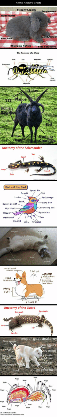 Cute, DeMarcus Cousins, and Fire: Animal Anatomy Charts  Floppity Loppity  ckitytickler  Poof Loof  Thumping PuffersFuzz  The Anatomy of a Wasp  666 Plague  ma  Burning  Churches  Anatomy of the Salamander  Cute  Parts of the Bird  Speed fin  Top  Looker  Peckumage  Scarf  Song box  Lower song box  Epaulettes  Tum  Secret pocket  Glycotysis  Flapper  Decoration  Med kit Nitro Grapples  widdle fwoppy feet  FUN DETECTION  RUMP  KIBBLE  RELEPTION  PROUD  TUFT  STUMPERS  Anatomy of the Lizard  I am death  Dry,  Roar  I am fire  ioov widler proper goat anatomy  wiggly listeners  ks  Nope Nop  Nope  Nope  Nope  Nope  Nope Nope  (b) Anatomy of a spider srsfunny:  Animal Anatomy Explained