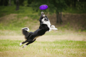 Animal Behavior College founder wrote some great summer ideas for our partners, Crazy Dog. Check em out!: Animal Behavior College founder wrote some great summer ideas for our partners, Crazy Dog. Check em out!