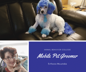 Abc, Animals, and College: ANIMAL BEHAVIOR COLLEGE  Mobile Pet Groomer  Evthoxia Moustaka http://bit.ly/2ZmnZN8 Evthoxia Moustaka's always knew she wanted a career helping animals but was not sure in what capacity. After earning a Bachelor of Arts degree in English and working as an animal science teacher one summer, her career path became clear; she would become a certified pet groomer. After many hours of research, Evthoxia enrolled in Animal Behavior College's (ABC) Grooming Instruction Program (GIP). She graduated and was certified in 2016 and is an Animal Behavior Certified Pet Groomer (ABCPG).