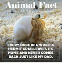 Animal Fact  OF THE DAY  FUNNY  DIE  EVERY ONCE IN A WHILE A  HERMIT CRAB LEAVES ITS  HOME AND NEVER COMES  BACK JUST LIKE MY DAD