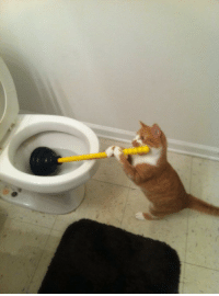 Cats, Tumblr, and Animal: animal-factbook: Cats are good at household chores, despite what they might lead you to believe and will perform tasks like cleaning toilets, changing lightbulbs, and dusting.