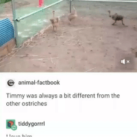 Funny, Memes, and Animal: animal-factbook  Timmy was always a bit different from the  other ostriches  tiddygorrml @epicfunnypage has the best memes