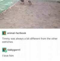 Love, Memes, and Animal: animal-factbook  Timmy was always a bit different from the other  ostriches  tiddygorrl  I love him I absolutely love him | Follow @cuteandfuzzybunch 👈 for the best animal memes!