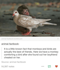 Boyfriend Cheating: animal factbook.tumblr.com  animal-fact book:  It is a little known fact that monkeys and birds are  actually the best of friends. Here we have a monkey  comforting a bird after she found out her boyfriend  cheated on her.  Source: animal factbook  16,397 notes