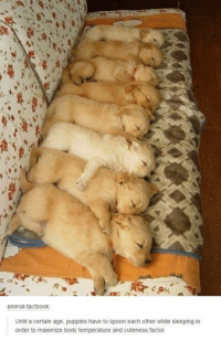 Animals, Anime, and Bodies : animal factbook  Until a certain age, puppies have to spoon each other while sleeping in  order to maximize body temperature and cuteness factor.